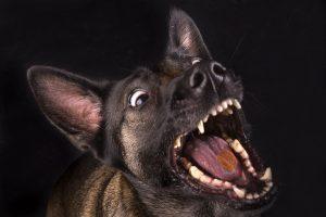 Honden fotograaf Limburg | kleine honden | grote honden | koekjes vangen | fotoshoot met hond