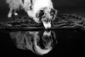 honden fotograaf Limburg | kleine honden | grote honden | fotoshoot met hond