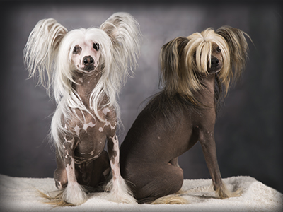 Honden fotografie studio