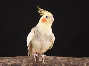 Vogel fotograaf Limburg | alle vogels | studio fotografie