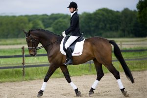 Paarden fotograaf Limburg | wedstrijd foto's fotoshoot paard | foto's met paard