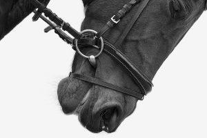 Paarden fotograaf Limburg | fotoshoot paard | foto's met paard | detail