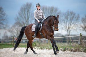 Paarden fotograaf Limburg | fotoshoot paard | foto's met paard