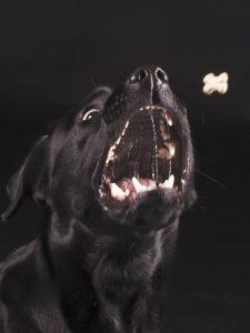 honden vangen koekjes