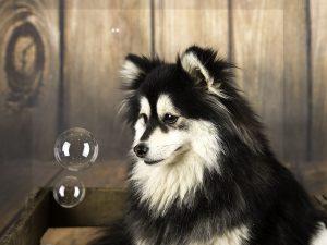 Honden fotograaf Limburg