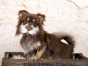 honden fotoshoot Brabant