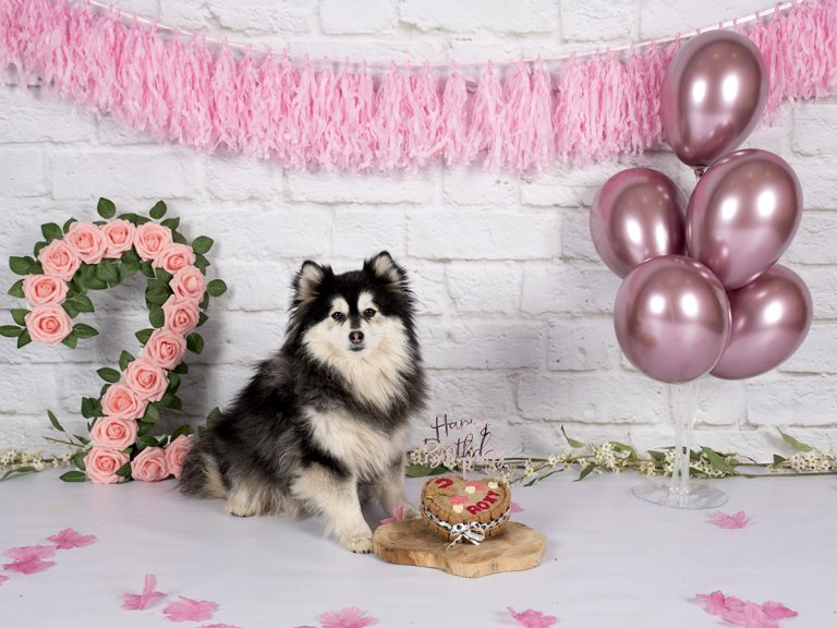 Honden cakesmash