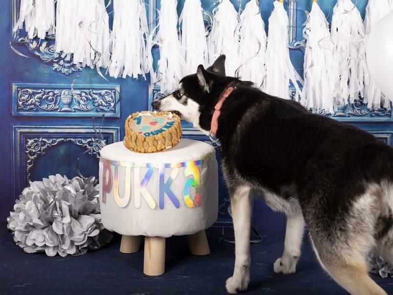 honden cakesmash Limburg